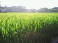Kurikoのうた♪-2011072206310001.jpg